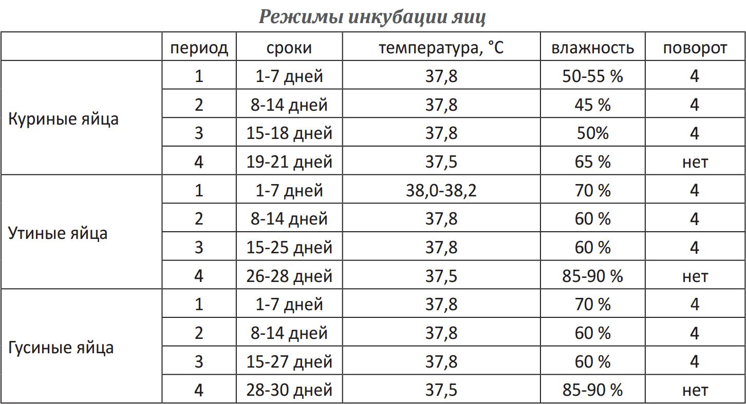 инкубация фазанов в инкубаторе-2