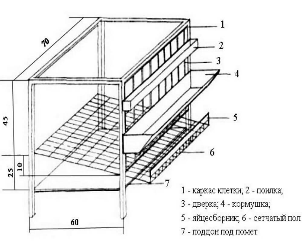 клетки для перепелов своими руками чертежи -2