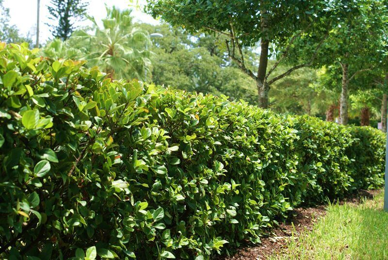 Как проводят обработку кустарников от вредителей и болезней весной?