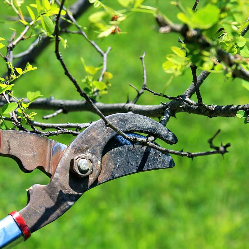 обрезка кустарников весной схема-4