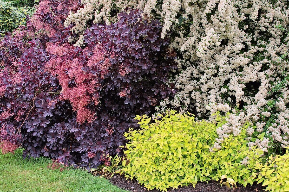 выращивание садовых кустарников-7
