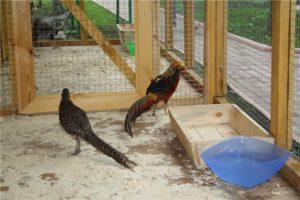 Домик для фазанов