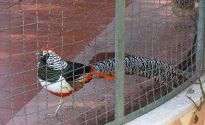 Клетка для фазанов