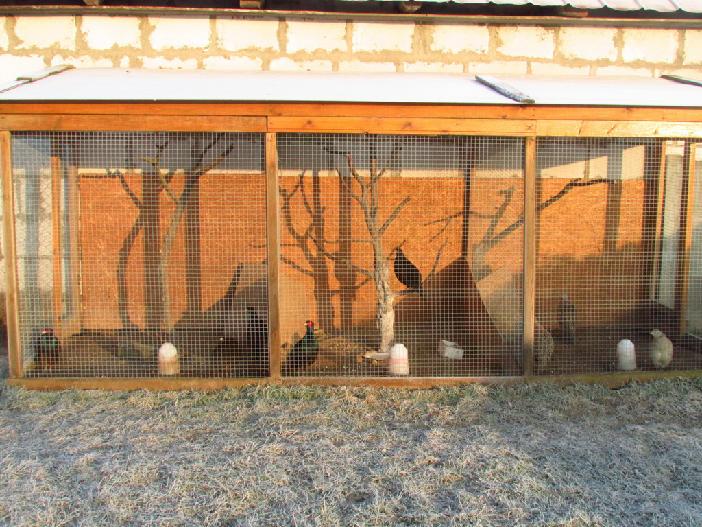судебным разбирательствам клетка для фазанов своими руками фото дешевый, стараюсь вылавливать