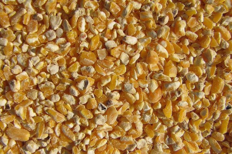 Кукуруза для индюков