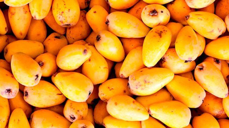 Израильский фрукт мушмула