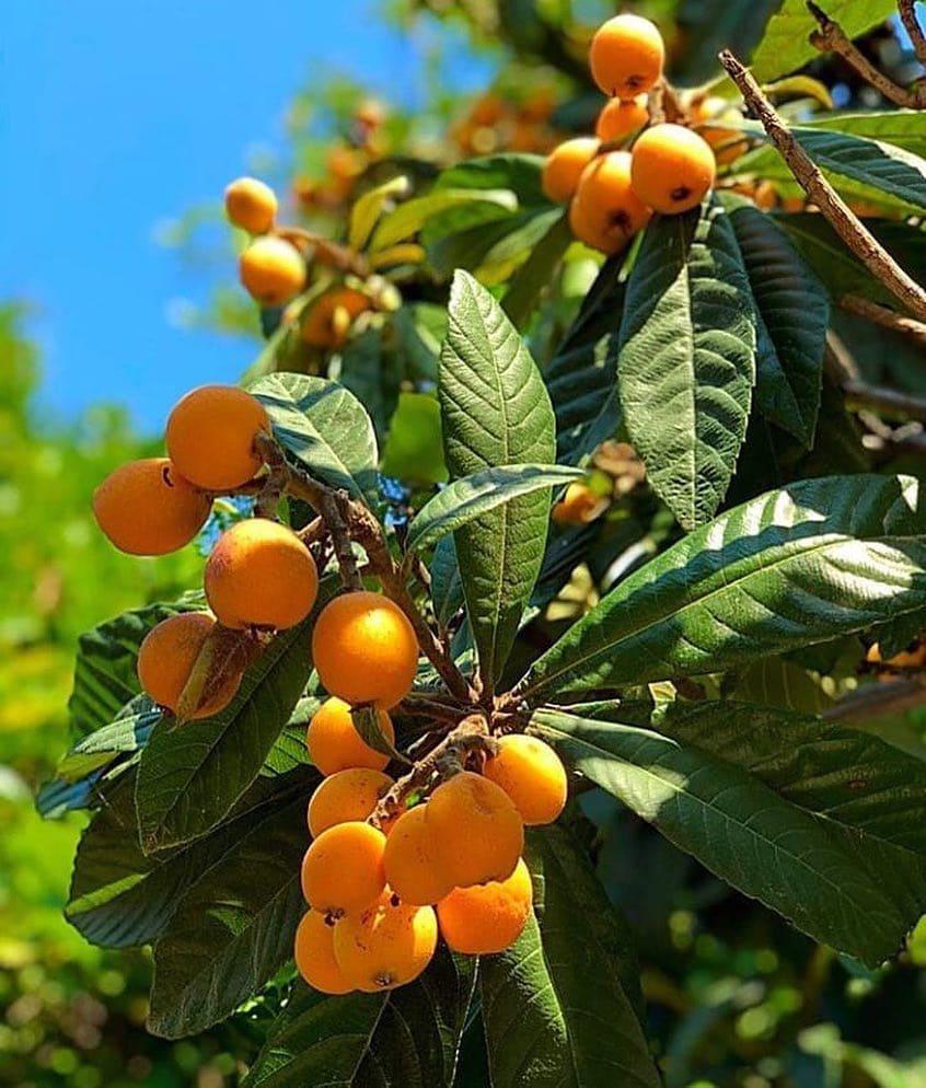 плоды растущие в сочи с фото следственных