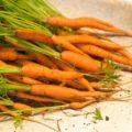 Как выращивать мелкую морковь?